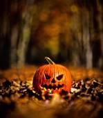 Halloween Pumpkin in wood — Stock Photo