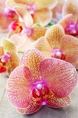 Orchids flowers — Stock Photo
