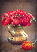 Red ranunculus flowers — Stock Photo