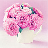 Delicate pink roses . — Stockfoto