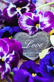 Fresh violet flowers — Стоковое фото