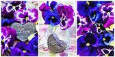 Purple pansy flowers — 图库照片