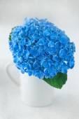 Blue hydrangea flowers — Stock Photo