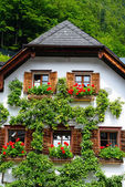 House with pear tree — Stock Photo