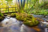 Golitha Falls Cornwall — Stock Photo