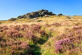 Bellever Tor Dartmoor — Fotografia Stock
