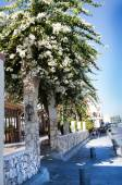Landscape with a view of the street with flowering trees — Stock Photo