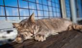Cat sleeping on a bench — Stock Photo