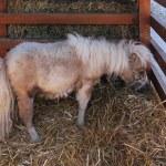������, ������: Pony horse