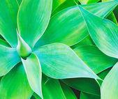 Cactus Plant — Stock Photo