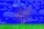 Lonely tree. — Stock Photo