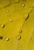 Autumnal dead leaf  — Foto de Stock