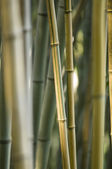 Green and brown Bamboo detail — Stock Photo