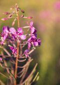 Луговой цветок — Стоковое фото