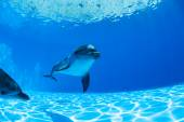 Dolphins couple — Stock Photo