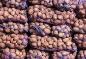 Potatoes in mesh bags — Stock Photo