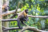 Cute funny monkey — Stock Photo