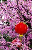 Asijský styl výzdobu lucerny — Stock fotografie