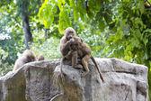 Cute funny monkeys — Stock Photo