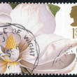 Stamp of Great Britain shows Flower — Stock Photo #65733951