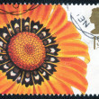Stamp of Great Britain shows Flower — Stock Photo #65733959
