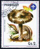 Stamp shows Mushroom — Stock Photo