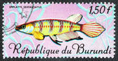 Stamp with fish  fish Epiilatus sexfasciaus — Fotografia Stock