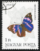 Stamp printed in the MAGYAR — Stock Photo