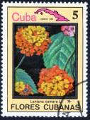 Postage stamp with  Lantana camara L — Foto de Stock