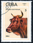 Stamp shows CRIOLLO — Stock Photo