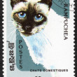 Domestic cat stamp — Stock Photo #66440673