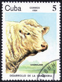 Stamp shows CHAROLAISE — Stock Photo