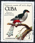 CUBA with Temminck bird — ストック写真