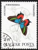 Fjärilar-serien stämpel — Stockfoto