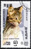 Марка домашней кошки — Стоковое фото