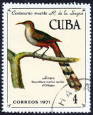 CUBA with Temminck bird — Stockfoto