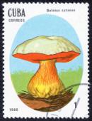 CUBA stamp with Mushroom — Stock Photo