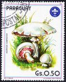 PARAGUAY stamp with Mushroom — Foto de Stock