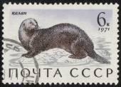 Znaczek wydrukowany morze wydry — Zdjęcie stockowe