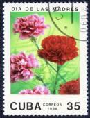 цветы на день матери — Стоковое фото