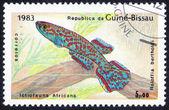 Ictiofauna Africana fish — Stock Photo