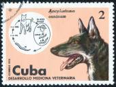 Dog printed Stamp — Stock Photo