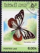 Parantica sita Butterfly — Stock Photo