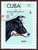 Thoroughbred Cows Stamp — Stock Photo