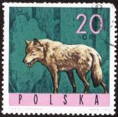 "Stamp ""Wild animals European forests"" — Stock Photo"