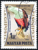 """Stamp of  """"Birds of prey forest"""" — Stock Photo"""