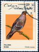 "Stamp of  ""forest birds"" — Stock Photo"