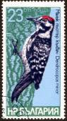 "Stamp of  ""Bird species of woodpeckers"" — Stock Photo"