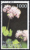 "Stamp of ""herbs Buryatia"" — Stock Photo"
