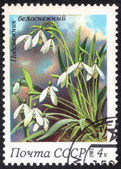 Stamp with bog plant — Stock Photo